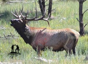 Archery Shot Placement for Elk
