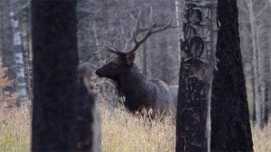 Hunting the Elk Rut. What does that really mean?